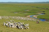 Herd of sheep couple