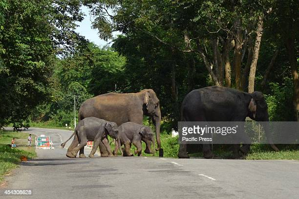 A herd of wild elephants cross a highway in search of dry land after floods hit Kaziranga National Park in Assam Nearly 900000 people are affected in...