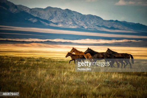 Herd of wild horses in Kazakhstan
