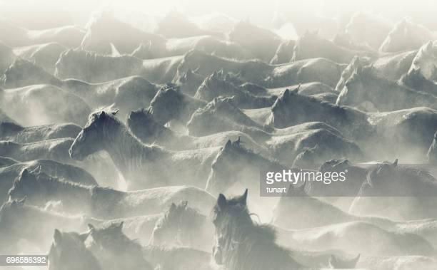 Troupeau de chevaux sauvages en cours d'exécution dans la poussière