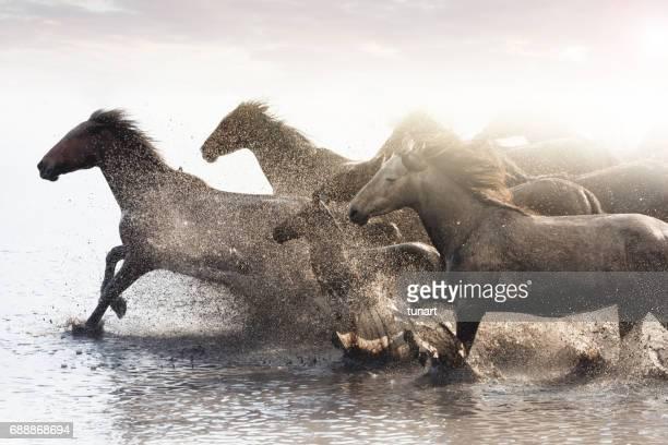 Manada de caballos salvajes corriendo en agua
