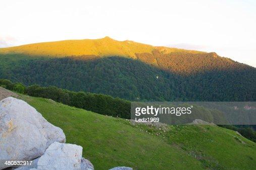 Herd on mountain slope : Stockfoto