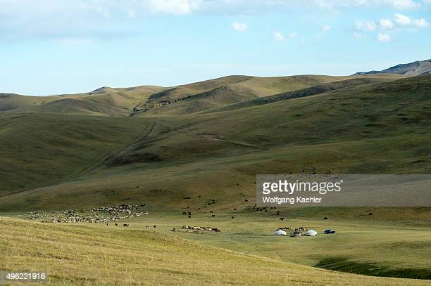 A herder ger with horses goats and cows in the Orkhon Valley near Kharakhorum in Mongolia