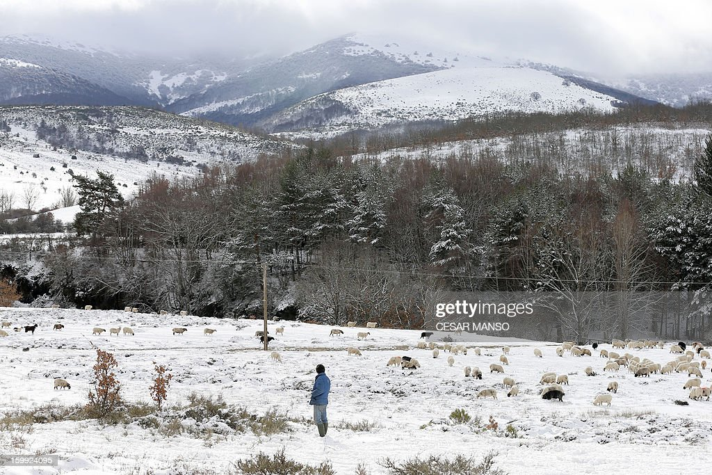 A herdsman stands near his flock of sheep on a snow-covered pasture in Pineda de la Sierra, near Burgos, on January 23, 2013. AFP PHOTO/ CESAR MANSO