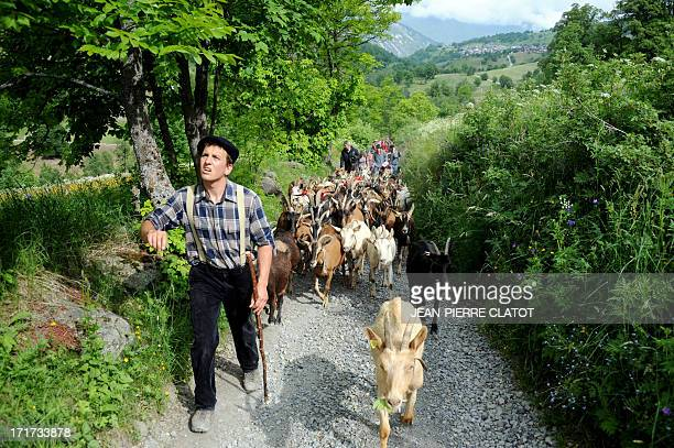 Herdsman Valentin leads a flock of goats followed by pupils on June 28 2013 in SaintMartindeBelleville French Alps during a transhumance to summer...