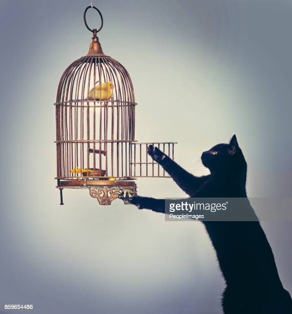 Here birdy, birdy, birdy…