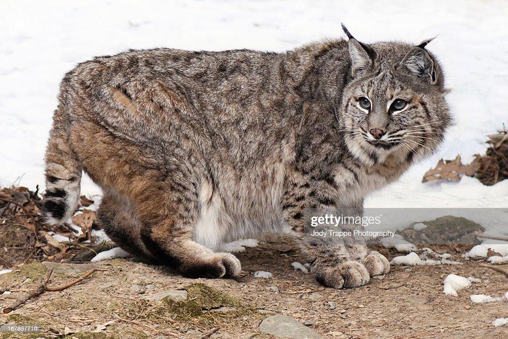 Here Pussycat