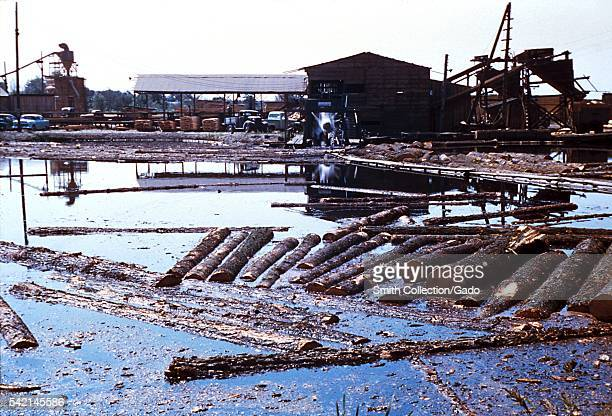 Here we find an Oregon log pod acting as a mosquito breeding place 1975 This polluted Oregon log pond contaminated with waste from logging activities...