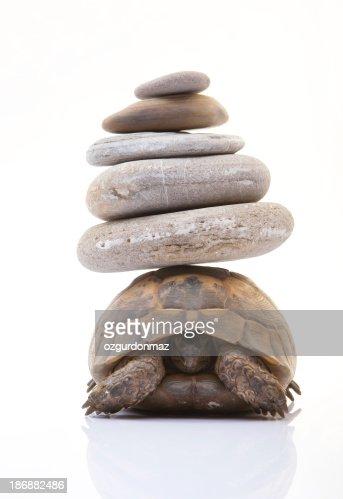 Herman di tartaruga