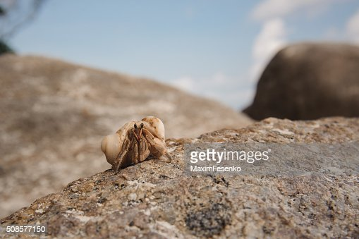 Hermit crab close-up on  background of stone and ocean : Stock Photo