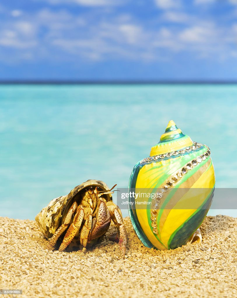 Hermit crab looking at shells with rhinestones : Stock Photo