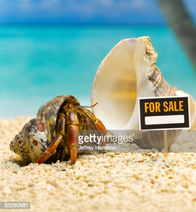 Hermit crab outside of shell with for sale sign : Stock Photo