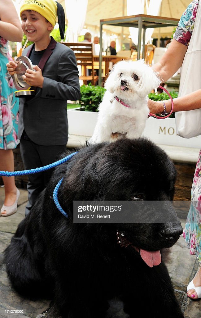 Hero Service Dog Atrayu poses with a guest at the Dogs Trust Honours held at Home House on July 23, 2013 in London, England.