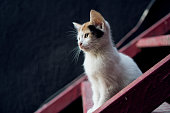 Cat poses in the middle of stairs