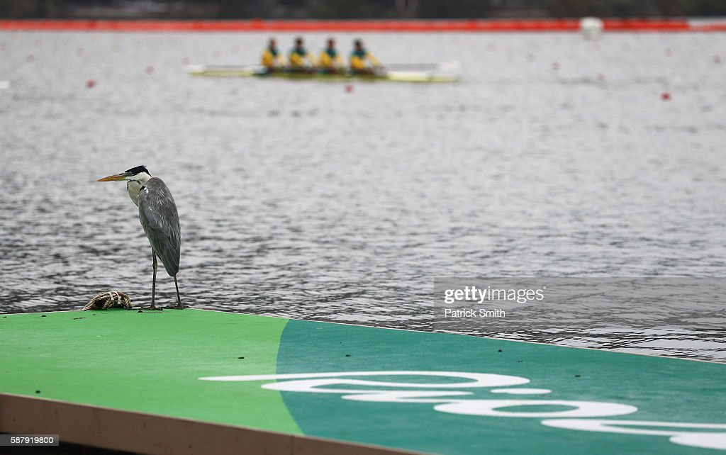 A heron is seen as competitors warm up on Day 5 of the Rio 2016 Olympic Games at Lagoa Stadium on August 10, 2016 in Rio de Janeiro, Brazil.