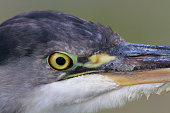 Extreme close up of a heron's eye