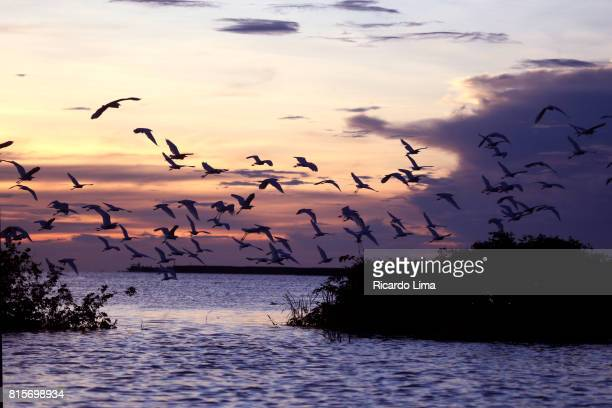 Herons Over Tapajos River
