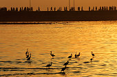 Herons stalk the placid waters at Haji Ali as devotees make their way to and from the darga