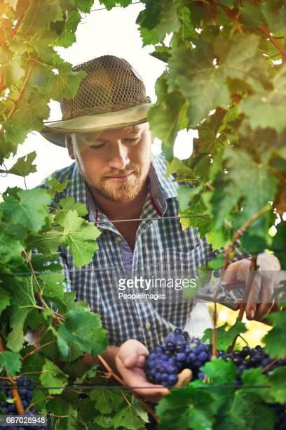 He's a master grape grower