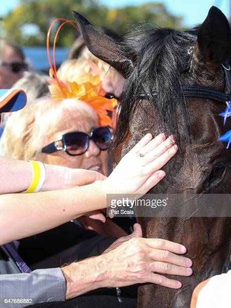 Hey Doc after winning the Australian Guineas at Flemington Racecourse on March 04 2017 in Flemington Australia