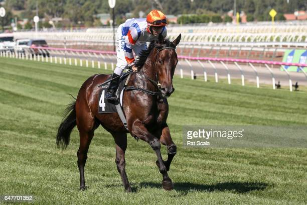 Hey Doc ridden by Luke Currie heads to the barrier before the Australian Guineas at Flemington Racecourse on March 04 2017 in Flemington Australia