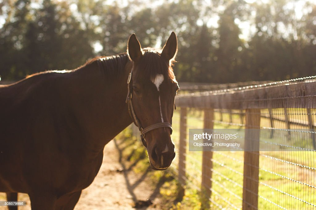 Hey there horse : Stock Photo