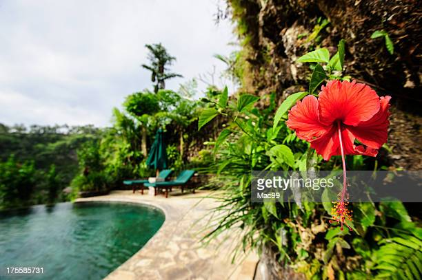 Hibiscus in Luxury Holiday Villa