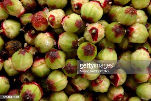 Hibiscus sabdariffa or roselle fruits : Stock Photo