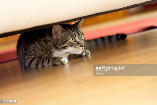 Ocultar cat