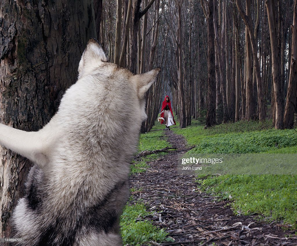 A Hiding Wolf Watches Little Red Riding Hood : Stock Photo