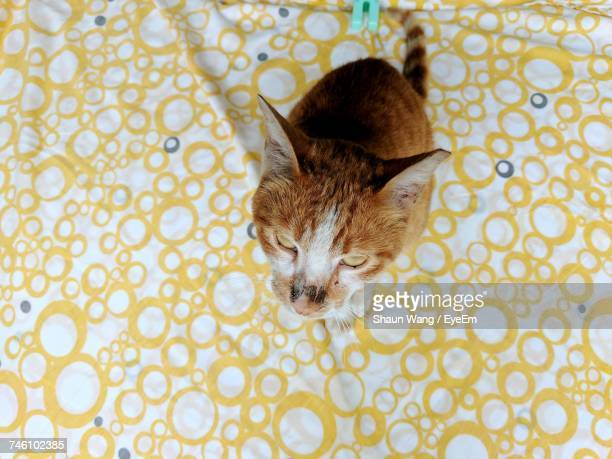 High Angle Portrait Of Cat On Bed At Home