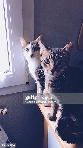 High Angle Portrait Of Cats On Table By Window At Home