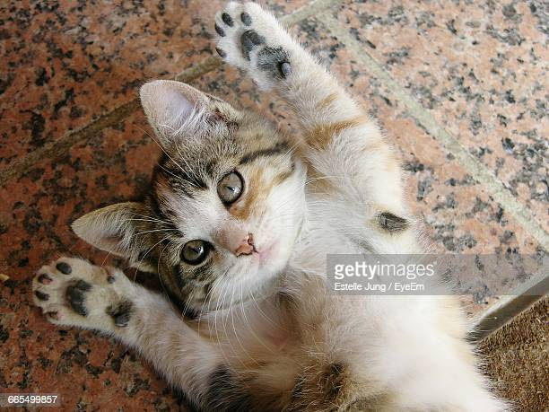 High Angle Portrait Of Kitten Stretching On Floor