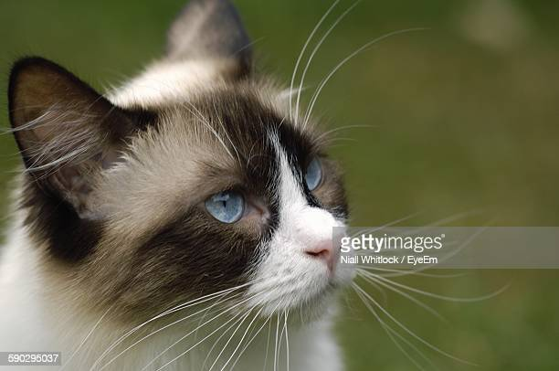 High Angle View Cat Standing Outdoors