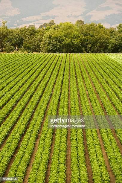 High angle view of a farm, California, USA