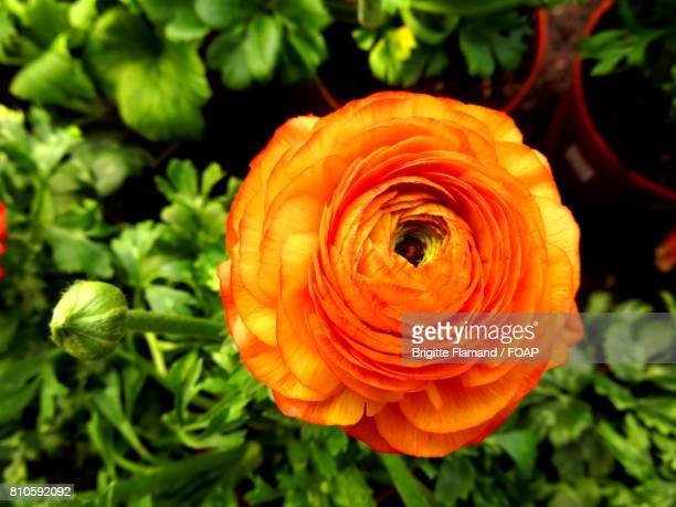 High angle view of a flower