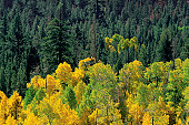 High angle view of a forest, Yosemite National Park, Mariposa County, California, USA