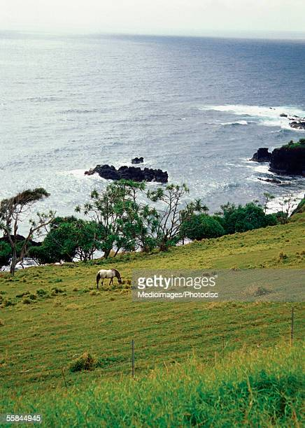 High angle view of a horse grazing on Hana Ranch with Pacific Ocean in background, Maui, Hawaii, USA