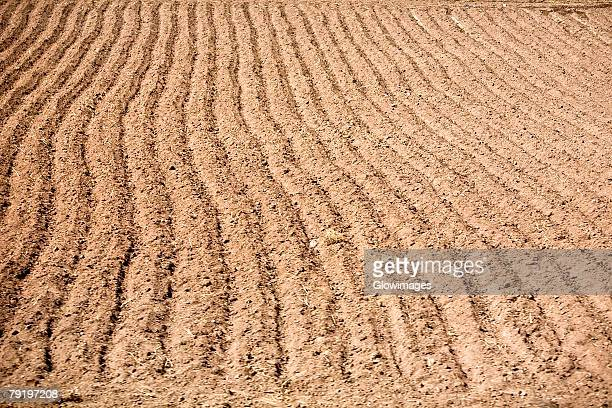 High angle view of a plowed field, Puno, Peru