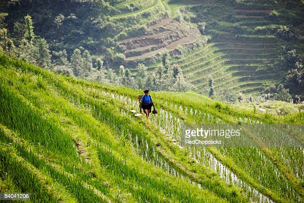 High angle view of a woman in a terraced rice field, Jinkeng Terraced Field, Guangxi Province, China