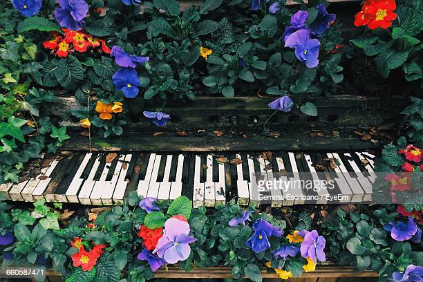 High Angle View Of Abandoned Piano Keys Amidst Flowers