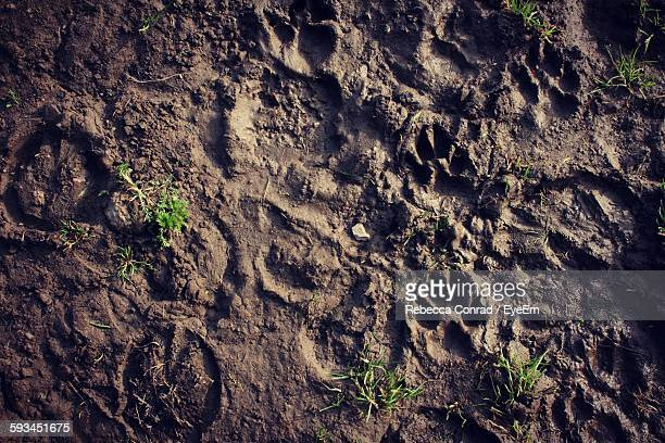 High Angle View Of Animal Track On Mud