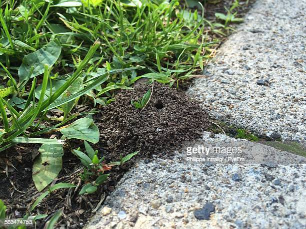 High Angle View Of Ant Nest Amidst Grass And Pathway