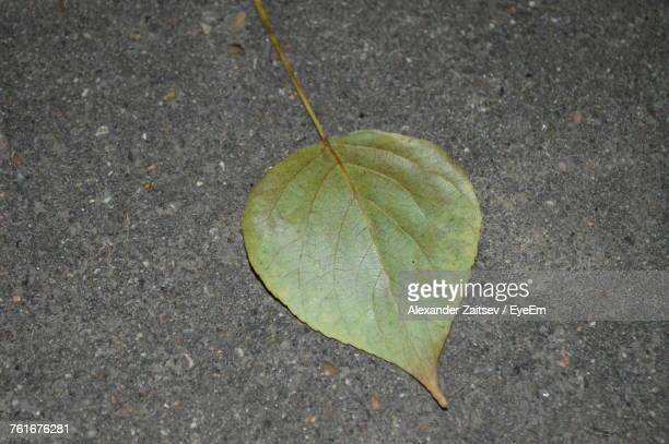 High Angle View Of Autumn Leaf