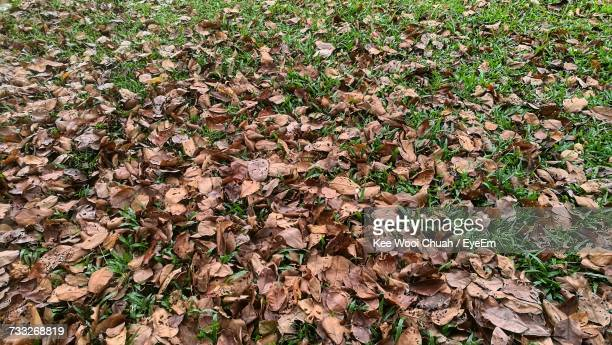 High Angle View Of Autumn Leaves On Field