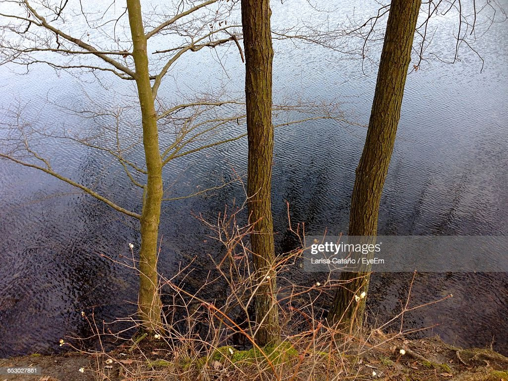 High Angle View Of Bare Trees By Lake