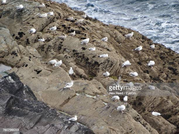 High Angle View Of Bird On Rock At Beach