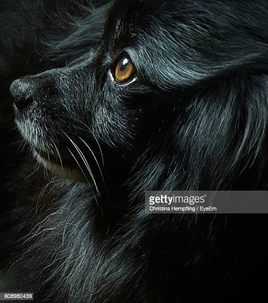 High Angle View Of Black Dog Looking Away