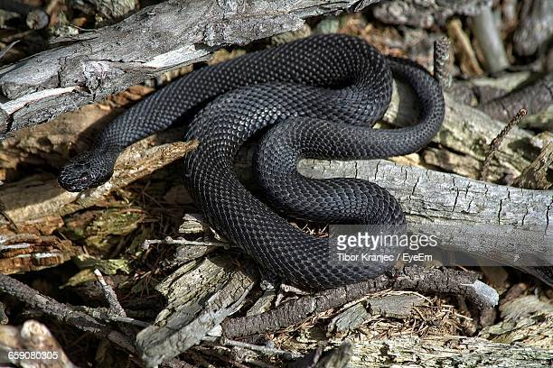 High Angle View Of Black Snake