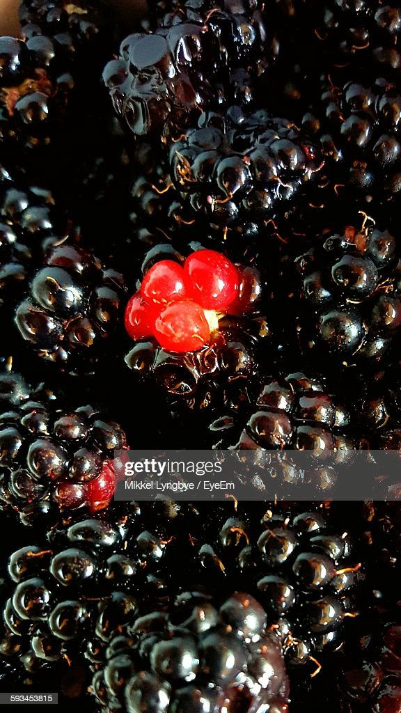 High Angle View Of Blackberries